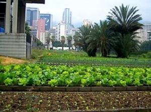 urban-garden-caracas